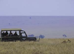Spotting lions on safari in the Masai Mara