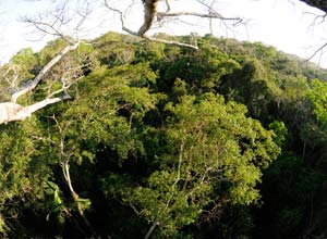 Rainforest from the canopy top
