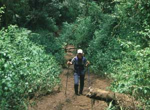 Trekking through the rainforest towards Machame Hut