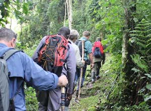 Guided walk in Bwindi