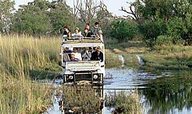 Vehicle on the Buffalo Safari