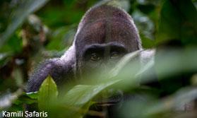 Congo Odzala Safari