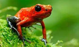Enjoy the wildlife of Costa Rica