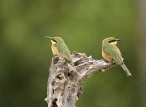 Excellent birding in the Okavango Delta