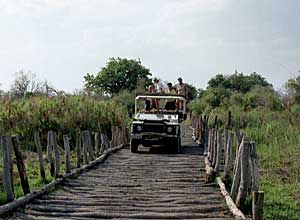 Bridge crossing in Moremi Game Reserve