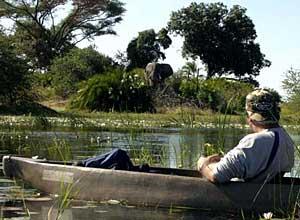 Moremi Game Reserve Mokoro