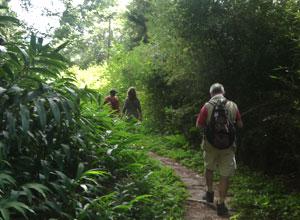 Hiking in Andasibe National Park
