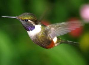 Visit hummingbird paradise