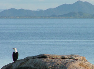 Fish eagle at Mumbo Island