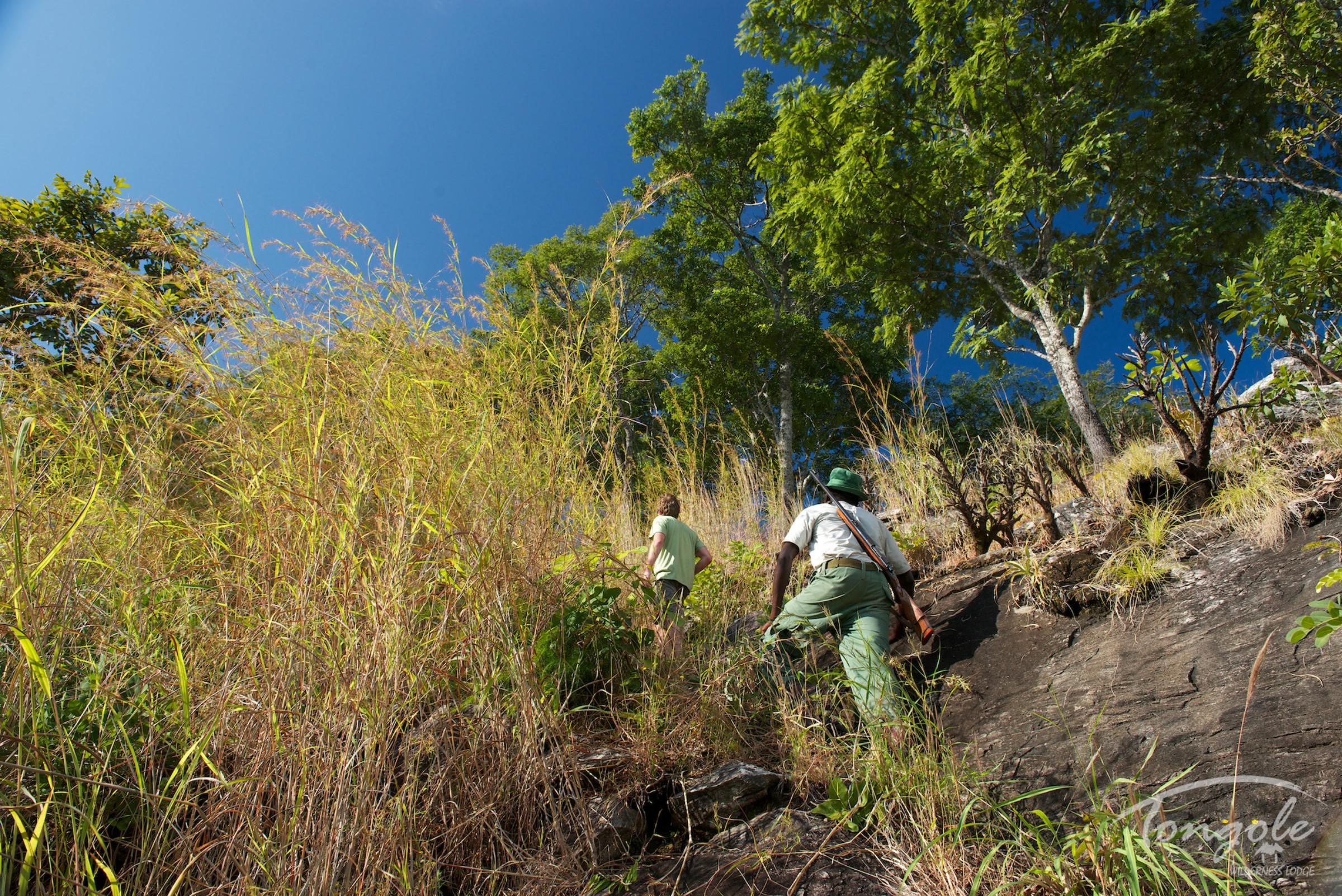 Walking safari from Tongole Wilderness Retreat
