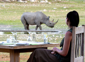 Watching rhino at Anderssons Camp