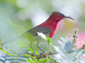 Bird watching on Phulchowki Hill