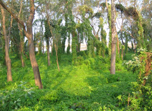 Take a walk in the forest near Koshi Tappu Wildlife Camp
