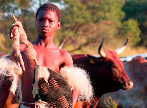 Zulu cattle boy