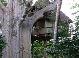 Chole Mjini treehouse